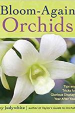 Bloom Again Orchids by Judy White