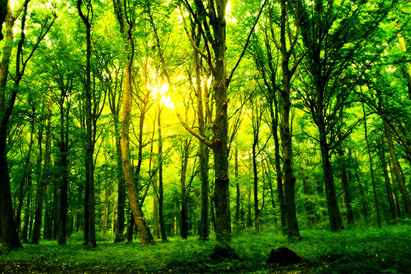 forest-600x400